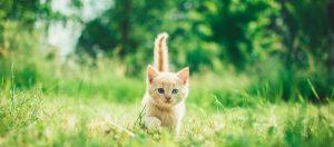 kitten-green